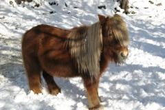 photos-hiver-o7-ang-065